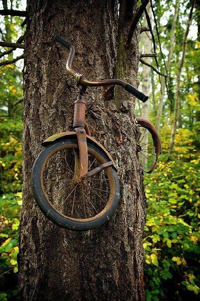 bicycletree