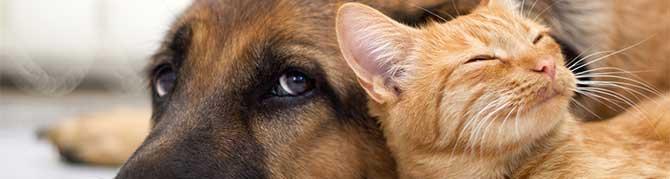 Кучето, най-добрия приятел на човека!