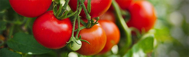Материализирана енерги - китка зрели домати!